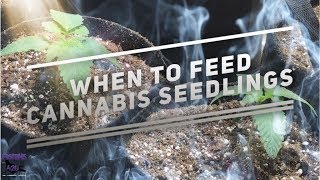 Time to Feed the Seed! w/Pigeons420