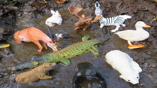 Muddy Zoo Animal Toys Getting Washed 🦓