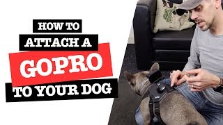How to Mount a GoPro on a Small Dog the Best Way