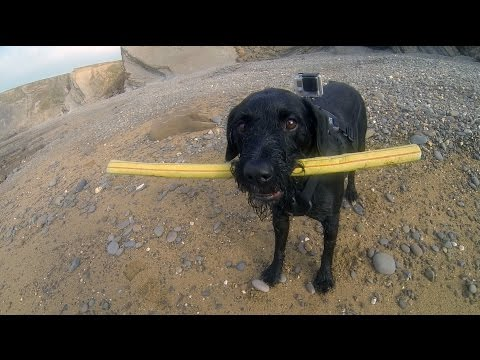GoPro Fetch Dog Harness: Capture The Action With Martin Dorey