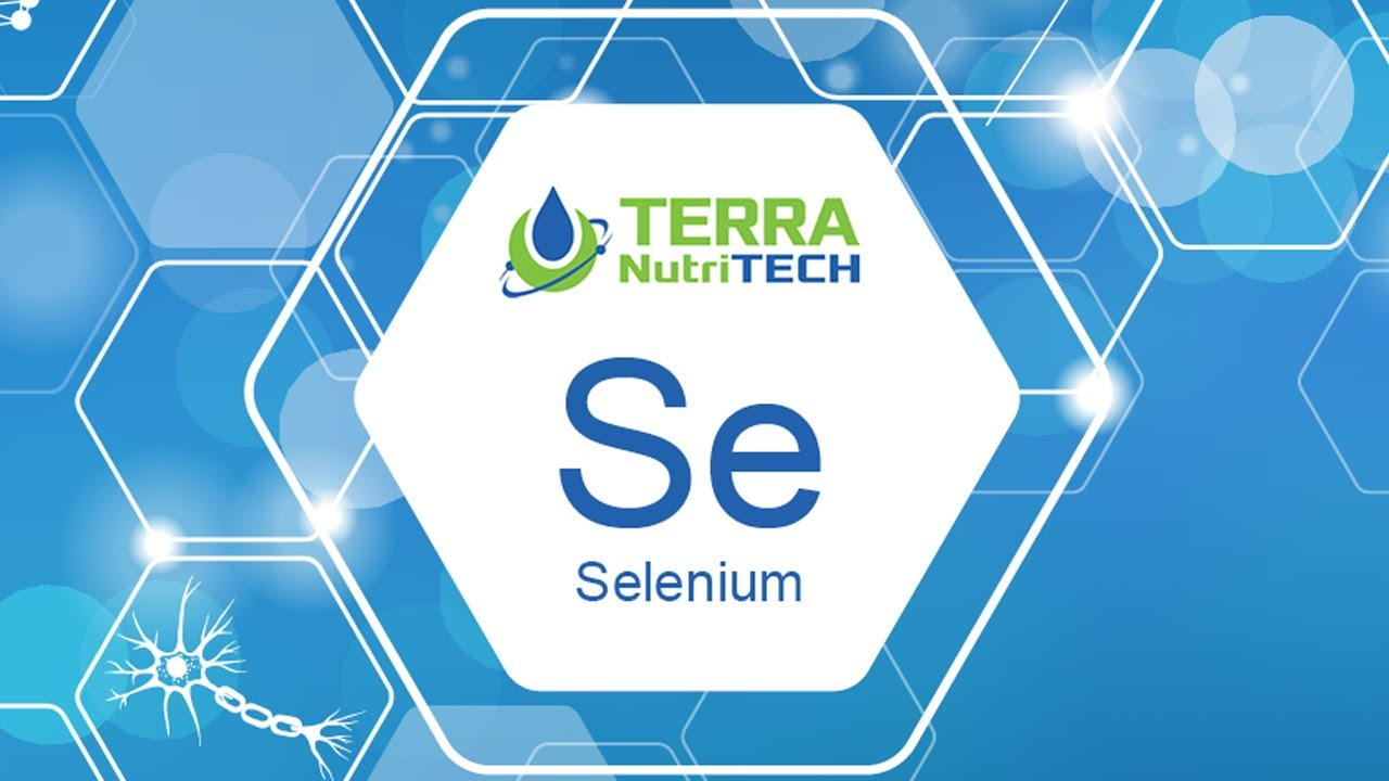 The Importance of Selenium for Animal Health and the role it plays in a healthy immune system for cattle.