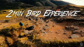 """2 min Bird Experience""【4K】 Mountain FPV@Japan #FPV #mountain"