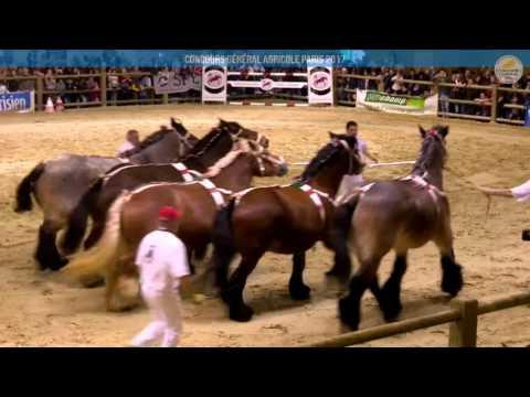 Voir la vidéo : Carrière Équine du 04 mars 2017, partie 3