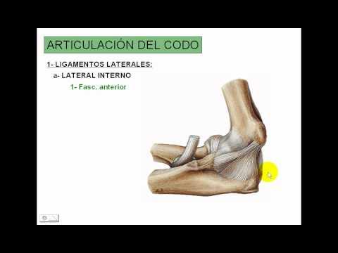 Medicamentos para las articulaciones y la restauración del cartílago