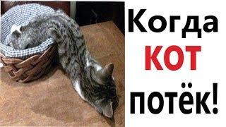 Приколы с котами - КОГДА КОТ ПОТЁК!!! СМЕШНЫЕ ЖИВОТНЫЕ! Попробуй не ЗАСМЕЯТЬСЯ – Domi Show