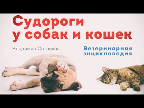 Судороги у собак и кошек