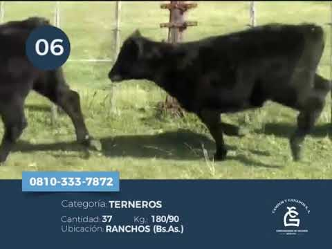 Machos - Ranchos Bs As