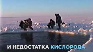 Шок! Спасение серых китов из ловушки