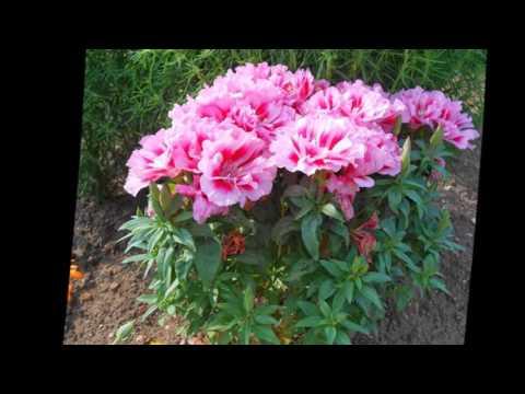 Mit Hilfe der Blumenblätter abzumagern