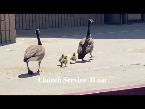 , title : 'Geese and goslings to Loma Linda Chinese Church