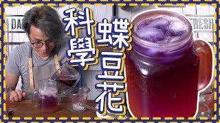 【科學堂】藍色定紫色? 蝶豆花檸檬梳打