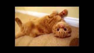 Групируюсь !))смешные коты! приколы! смешные животные!  / Fun! Funny Animals!  Funny Cats! Humor!
