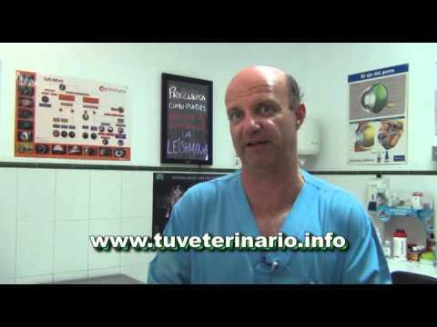 El tratamiento de la diabetes tipo 1 insulina