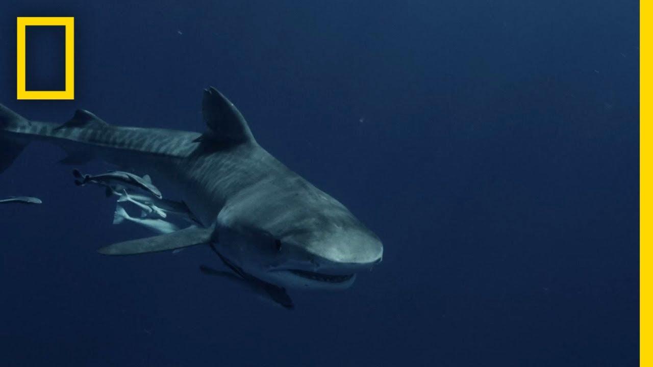 A Case of Mistaken Identity | Shark vs Surfer thumbnail