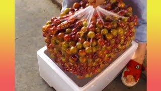 These strange fruits will make you surprise (Satisfying compilation!!!)