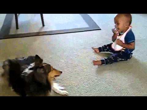 Hund bringt Baby zum Lachen