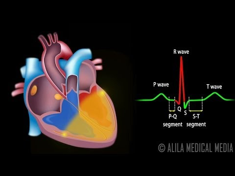 Cardiac Conduction System and Understanding ECG, Animation.