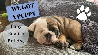 BRINGING HOME OUR PUPPY//GETTING AN ENGLISH BULLDOG