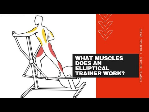 The Benefits of Elliptical Trainers: What Muscles Does an Elliptical Trainer Work?