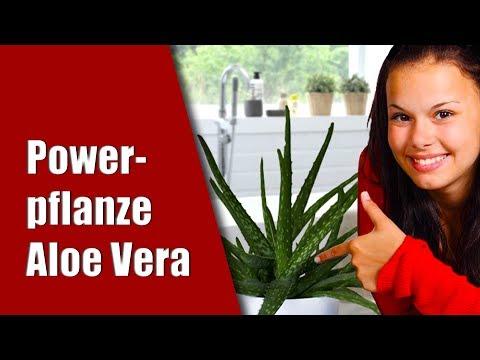 ALOE VERA Pflanze 😁🍃 Meine Erfahrung. BESTE Heilmethode für Wunden, Sonnenbrand und Hautprobleme!
