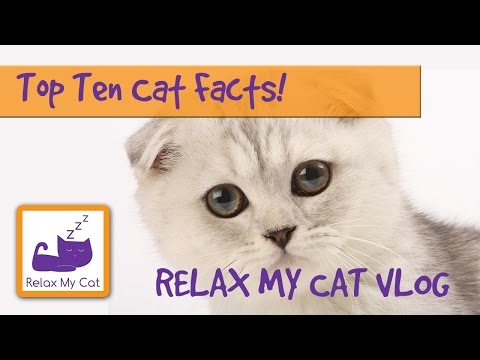 Top Ten Facts About Cats! 🐱 #FACTVLOG01