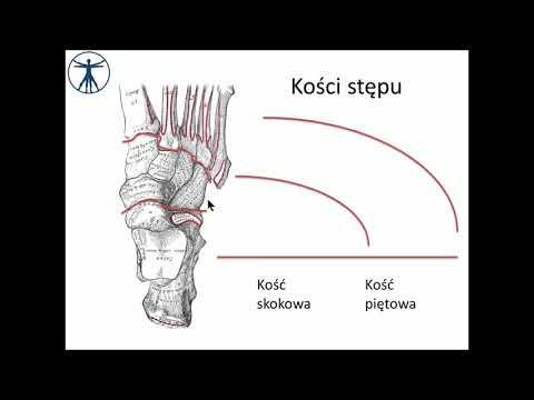 Końska deformacja stóp kod ICD