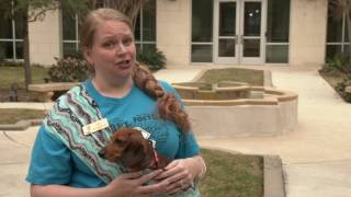 Why do we participate?- Diamond Dachshund Rescue of Texas