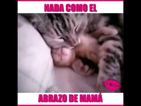 Abrazo de gato calma pesadilla de su hijo gatito, amor de madre