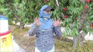 Las Desmadrosas Del Campo!! | Raza De Sonora Y Oaxaca | Trabajos De Campo USA