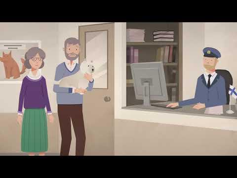 Видеоинструкция: как путешествовать с домашним животным транзитом через территорию России