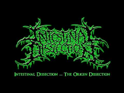 Intestinal Dissection   The Origin Dissection