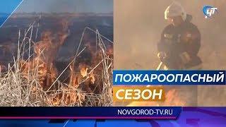 В Новгородской области начались травяные пожары