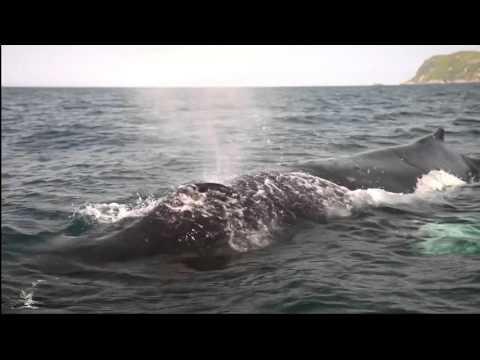 La Forme des Îles, documentaire de Patrick Viret - Bande-annonce