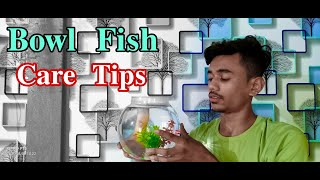 How to Take Care of Bowl Fishes | Caring Tips for Your Bowl Fish| Aquarium Fishes Care Tips in Hindi