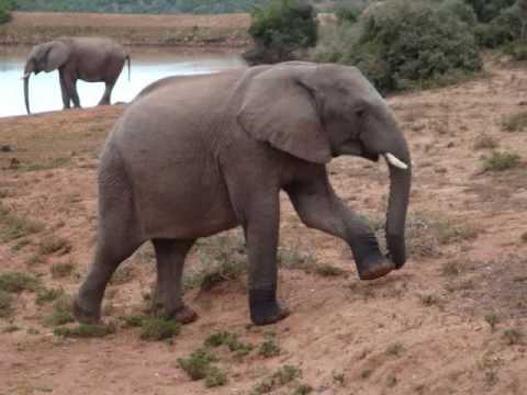 Addo Elephant N.P.