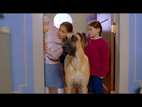 两个孤儿捡到一条小狗,却不敢告诉养父母,偷偷的把小狗养大