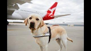 ASSISTANCE DOG UK SERVICE ID BADGE FOR UNITED KINGDOM GREAT BRITAIN AREA ADi