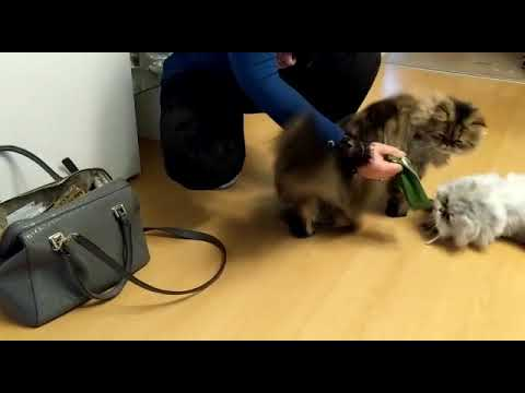 Katzen entdecken Baldriantee in meiner Handtasche 😂