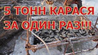 Клев рыбы в тюмени на 5 дней