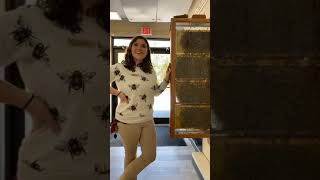 Zoo to You: Live from the honeybee hive