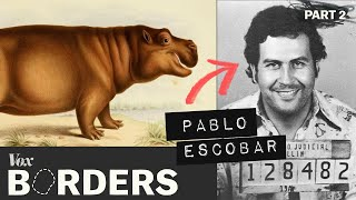 How this drug lord created a hippo problem in Colombia