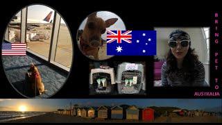 How to Bring Ship your Dog to Australia / Como Levar seu Cachorro para a Austrália