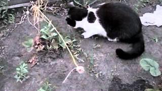Кот Василий и Царевна лягушка