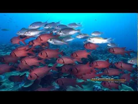 """Tauchabenteuer Palau - Tauchkreuzfahrt auf der """"Palau Siren"""" zu den besten Tauchplätzen von Palau, Palau allgemein,Palau"""