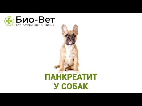 Панкреатит у собак. Ветеринарная клиника Био-Вет.