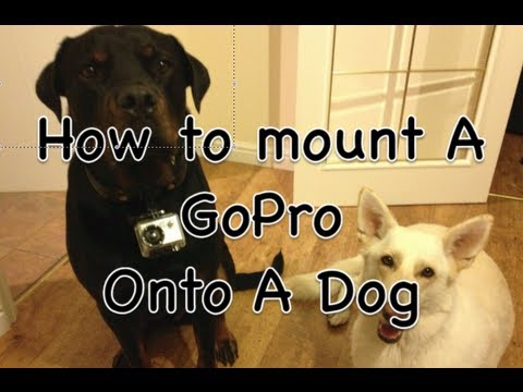 How To Mount GoPro Camera On A Dog Collar - Easy, Simple, FREE, DIY Tutorial