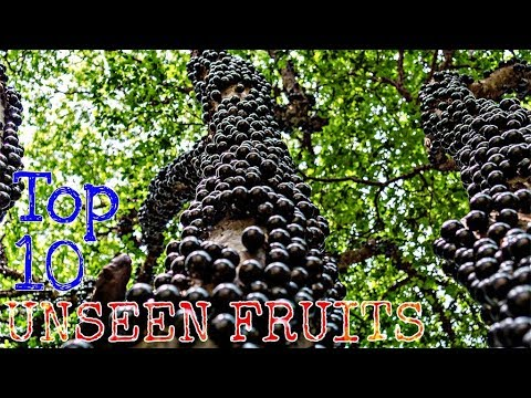 Top 10 Unseen Fruits they do exits On Earth!