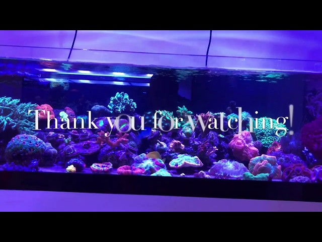 60 gallons reef  tank  Tour Let's Go!!