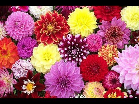 Vtipy 338 - Rosemary má ráda květiny