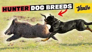 These Are 10 Best Hunting Dog Breeds